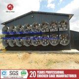 Jaula del pollo de la capa de los surtidores del equipo de las aves de corral en Suráfrica