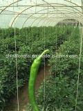 Qualität und preiswerte Ballenpreßschnur der Preis-Landwirtschafts-Verpackungs-Rope/PP