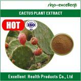 Extrait normal pur de cactus d'opuntia de 100%
