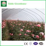 Estufa inteligente do túnel da película plástica para plantar flores