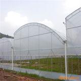 Invernadero polivinílico del túnel de la película del bajo costo para la venta con el tipo de la endentadura