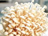Беля машина для гриба Enoki