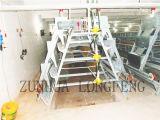 Grote Capaciteit van de Kooi van de Kip van de Laag met ISO9001