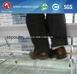 H tapent le produit neuf de matériel de ferme de cailles