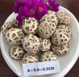 Weiße Blumen-Pilz-getrocknetes Gemüse