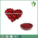 Reiner Moosbeere-Auszug mit Anthocyanidin 1-25%, Proanthocyanidins 1%-70%