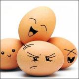 Inchiostro da stampa commestibile per stampa di superficie totale delle uova