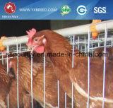 Gabbie d'argento del pollo di strato dell'uovo dell'azienda avicola di prezzi della presa di fabbrica della stella