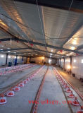 턴키 프로젝트를 위한 전 세트 자동적인 장비를 가진 주문을 받아서 만들어진 강철 구조물 농장