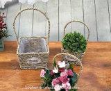 (BC-SF1010) Cestino naturale Handmade ecologico del fiore della paglia