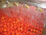 自動フルーツジュースの製造設備
