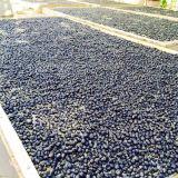 Il nero Gojiberry dell'alimento biologico della nespola