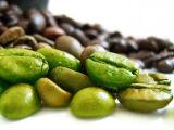 Grünes Kaffeebohne-Auszug-Puder-/Coffea-Arabica L