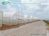 Grundlegendes Tunnel Plastic Greenhouse für Sale