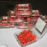 Colore rosso organico Goji dell'alimento salutare della frutta secca della nespola