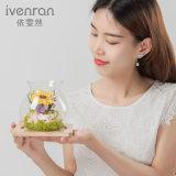[إيفنرن] حفظ زهرة مهرجان هبات