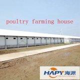 Edificio de acero en casa de las aves de corral con el equipo entero para la capa y el criador de la parrilla
