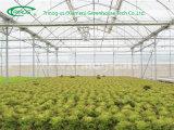 Serre chaude moderne de broccoli de culture hydroponique à vendre