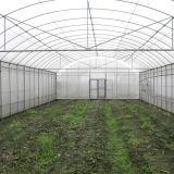 Commercial&Good는 야채를 위해 단 하나 경간 녹색 집을 이용했다