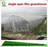 농업 일반적인 이용된 삽입된 온실