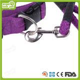 Trela colorida do colar do animal de estimação do produto do animal de estimação do cão grande da alta qualidade