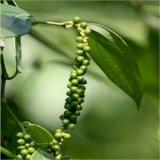 Estratto naturale 98%Piperine del pepe nero per gli api di supplemento dell'alimento
