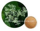 Поставка чисто естественное Anti-Inflammatory Triptolide фабрики 0.48% выдержки лозы бога грома