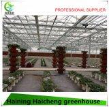 야채를 위한 현대 Hydroponic 유리제 온실