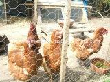 Rete metallica esagonale usata per il collegare di pollo e Gabion