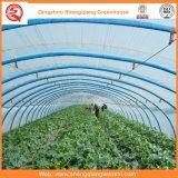 Multi-Span Plastic Serre pour la plantation