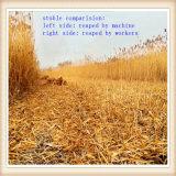 тростник серии 4gl тепловозные & жатка зернокомбайна джута