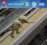 Las aves de corral introducen a fabricantes el tipo equipo de H de granja de la jaula del pollo de la capa
