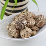 전통 중국어 음식에 의하여 말리는 차 줄무늬 표고 버섯
