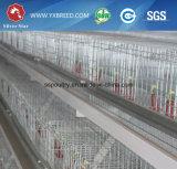 Клетки цыпленка/клетки бройлера/клетки цыплятины (A3B126)