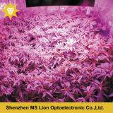 La pianta medica LED della PANNOCCHIA di prezzi di fabbrica 800W 1000W 12000W coltiva l'indicatore luminoso