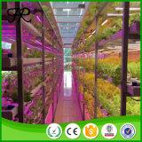 Hohe Effizienz LED Pflanze Volles Spektrum wachsen Licht