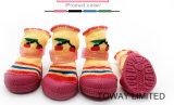 D'animal familier de produits le crabot de tricotage d'usure de gaine à la maison cogne des chaussures