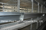 Camp chaud de poulet d'éleveur de vente de technologie de Poul (trame de H)