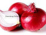 Лук высокого качества свежий красный