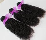 8A 브라질 Virgin 사람의 모발 직물 비꼬인 컬 머리