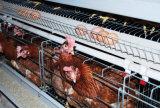 Matériel complètement automatique de cage de poulet de couche d'exploitation de volaille et d'élevage