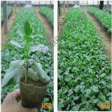 Bio fertilizante orgânico da alga com o regulador de crescimento da planta