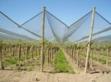 Белая анти- сеть окликом для земледелия