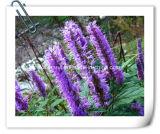 صاحب مصنع طبيعيّة [شنس] [موسلا] عشب 10:1 مقتطف مسحوق