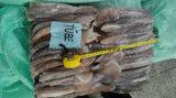 Meer gefrorenes Illex Kalmar-Gefäß