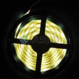 C.C. flexible 24V de la luz de tira de la calidad SMD5050 LED los 30LEDs/M