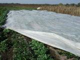 Tessuto UV di galleggiamento del coperchio di riga per agricoltura