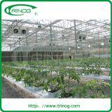 Substrati idroponici commerciali per il raccolto di pomodori