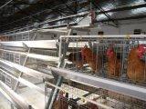 Automatischer Bratrost-Rahmen im Geflügel-Haus mit niedrigem Preis