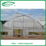 Multi-Span Agricultural Commercial Film Greenhouse